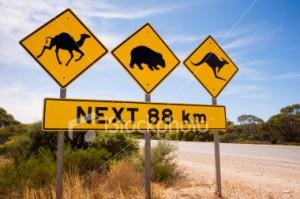 Australian-sign-camels-wombats-kangaroos