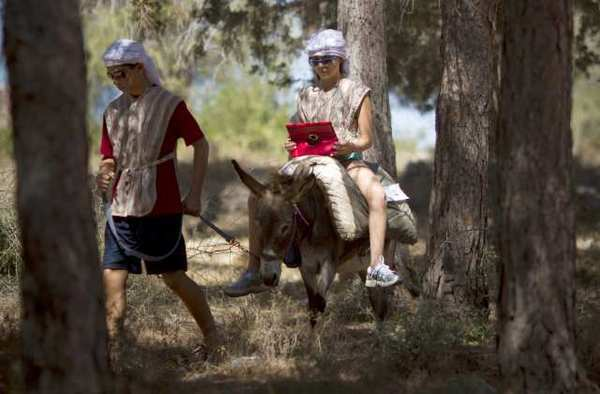 Donkeys become Wi-Fi hot spots in historic Israeli park