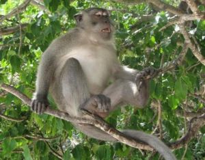 Man mistakes son for monkey, shoots him dead
