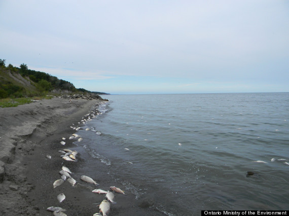 Dead Fish, Birds Wash Up On Lake Erie Shores In Latest Mystery