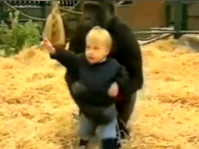 WATCH: 300-lb gorilla plays with trusting toddler