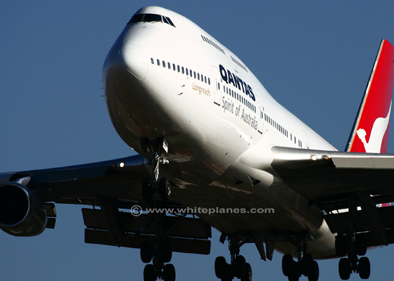 Qantas Boing 747 snake found onboard