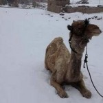 cairo-snow