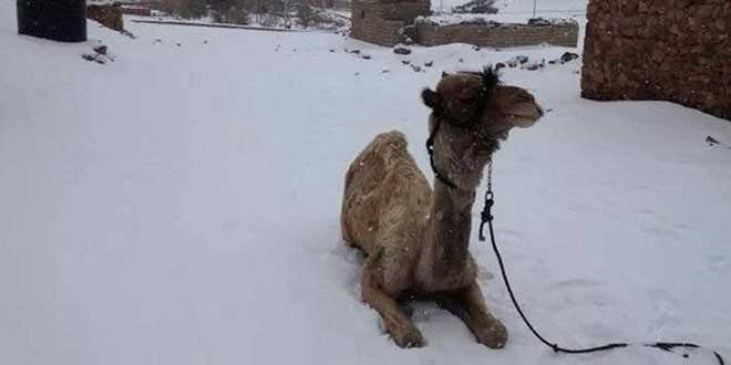 Snow Falls In Cairo For The First Time In 100 Years!